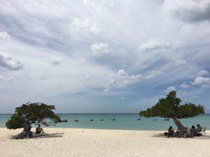 divi divi bomen op eagle beach